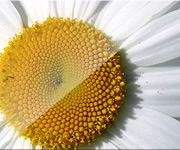 """L'image """"http://www.illiweb.com/bl/skins/grandenally_yellow/images/img06.jpg"""" ne peut être affichée car elle contient des erreurs."""